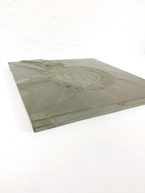 Bild 4 von 70er Amonit auf Schiefer