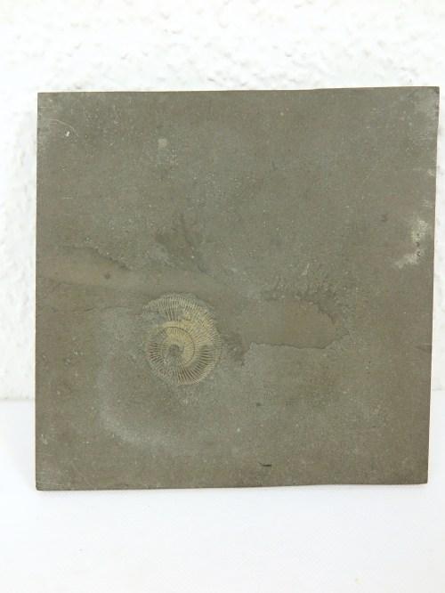 Bild 5 von 70er Amonit auf Schiefer