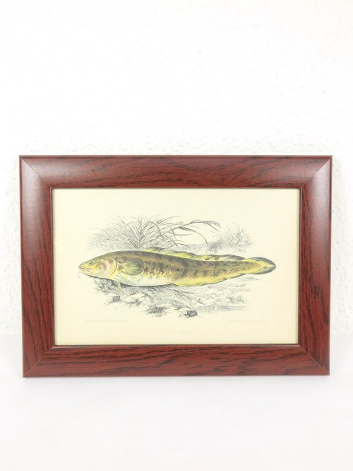 Bild 1 von um 1860 Bild Lotte Fisch Stich/Radierung