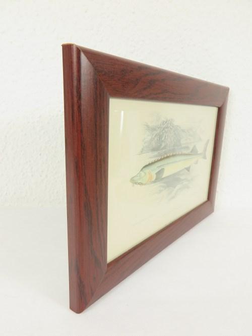 Bild 2 von um 1860 Bild Lotte Fisch Stich/Radierung
