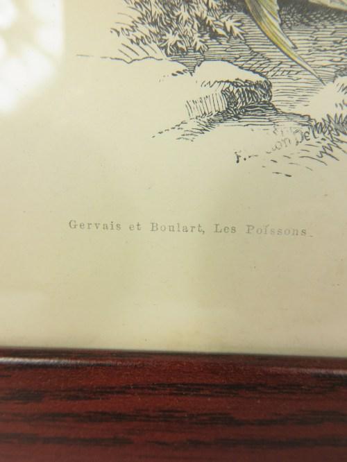 Bild 3 von um 1860 Bild Lotte Fisch Stich/Radierung