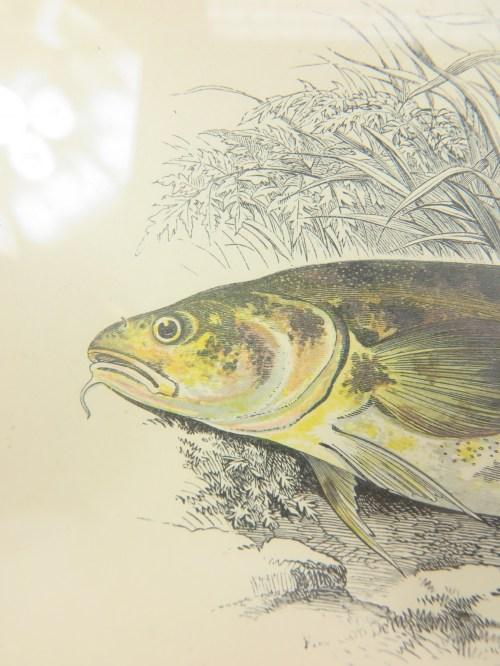 Bild 4 von um 1860 Bild Lotte Fisch Stich/Radierung
