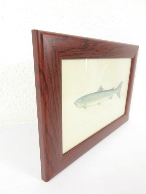 Bild 2 von Bildfisch Lachs von 1876