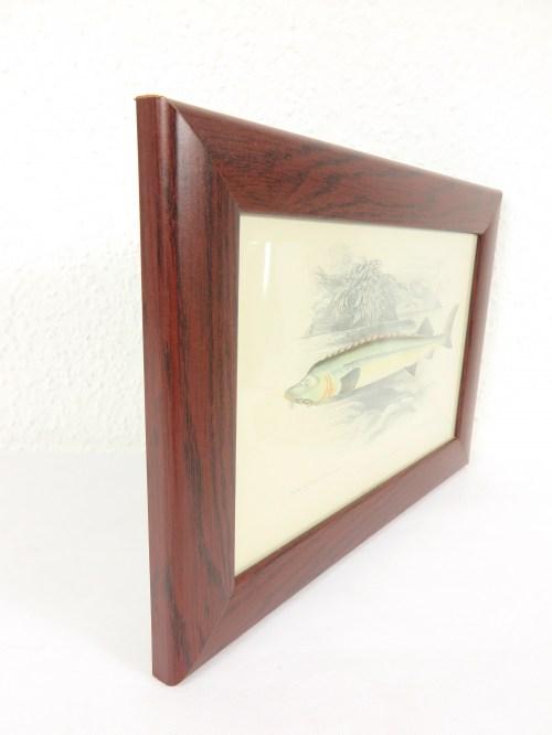 Bild 2 von Bild Stör Fisch von 1876